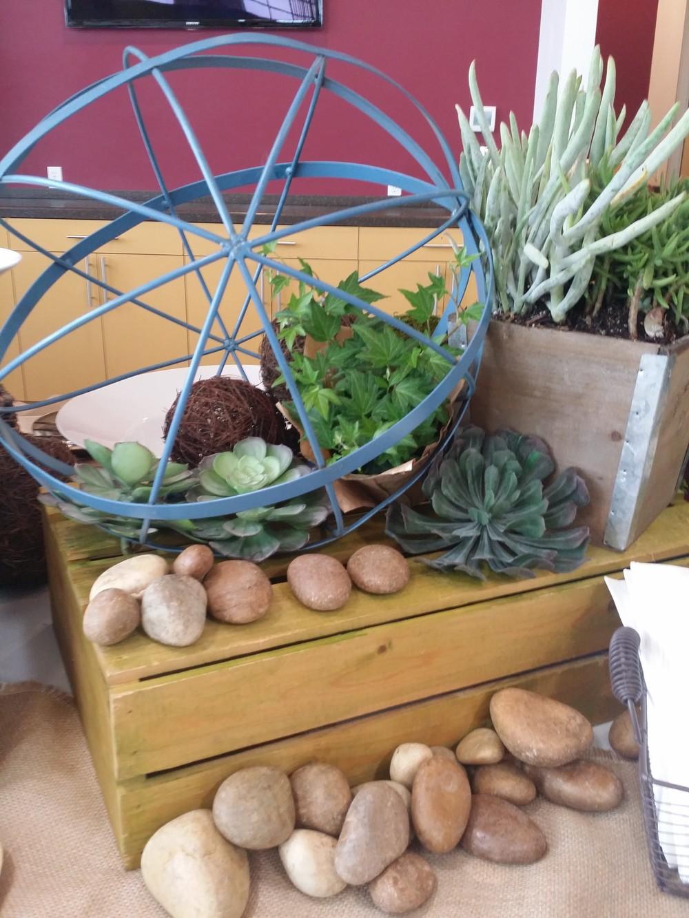 Decor Succulents Rocks 2.jpg