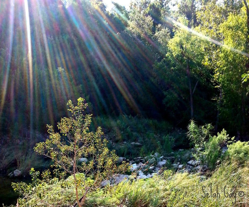 Bull Creek 1