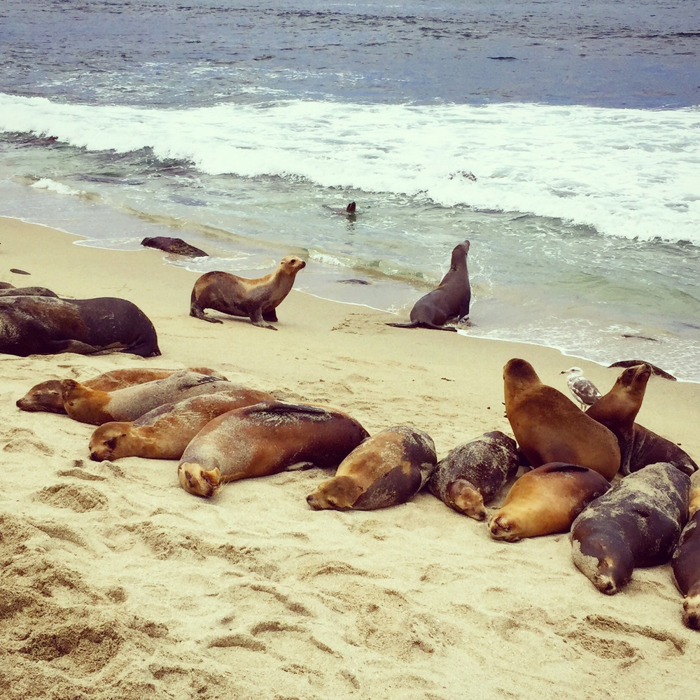La Jolla Cove Seal Beach