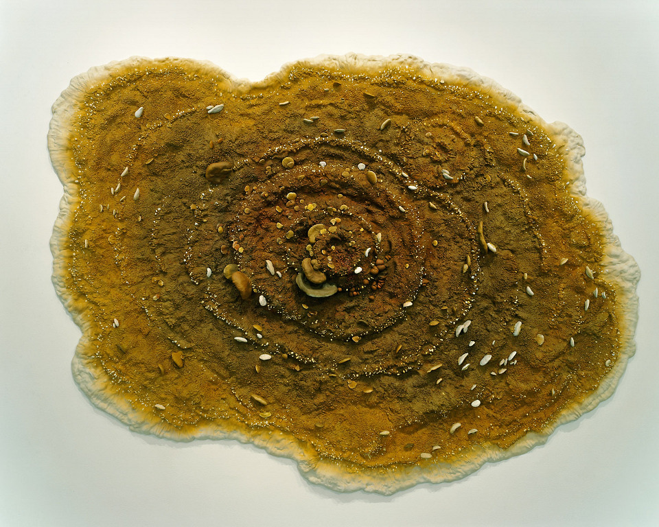 Dry Rot, 1998, thermoset, polymer, epoxy, mahogany, plywood and plexiglass, 37 1/2 x 61 1/4 x 5 inches