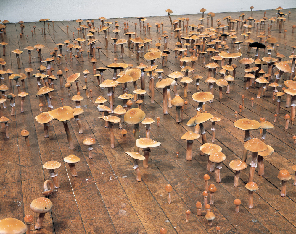 Psilocybe Cubensis Field, 1997, Thermoset polymer, lacquer, oil, and steel, 4 1/4 x 328 x 222 inches