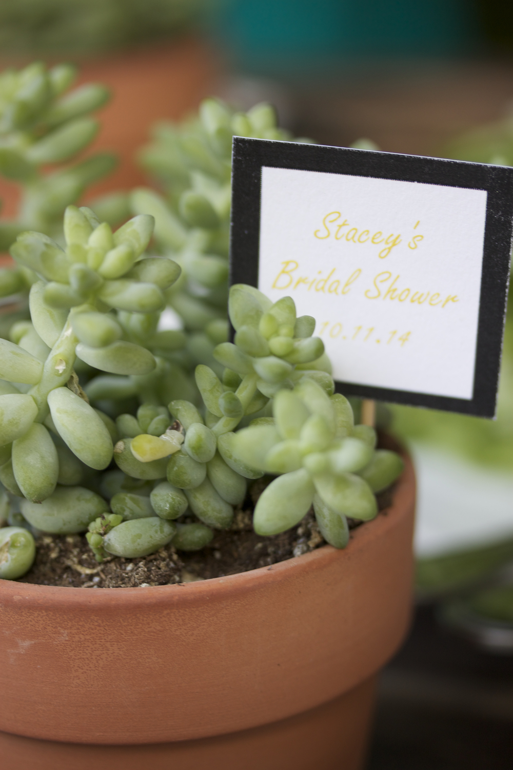 // The super cute succulent favors. Photo by June Bayha.