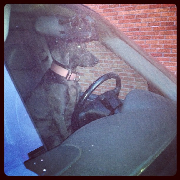 Dogs driving cars = awesome sauce. (at Sheldon Clark High School)
