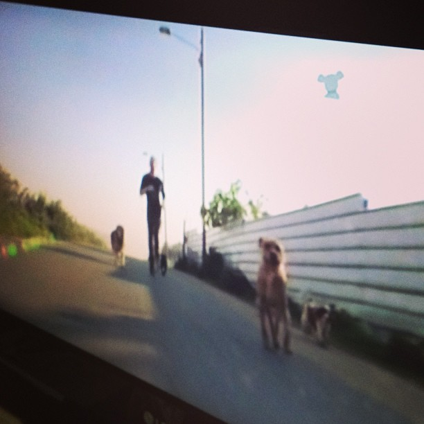 What's more ridiculous? the fact there is a tv channel 4 dogs or that I've been watching it for 5 min… (at Saraland, AL)