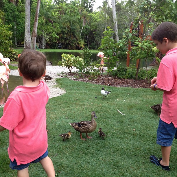 My kids are attempting to build there own duck Dynasty… Happy happy happy. (at Sarasota Jungle Gardens)