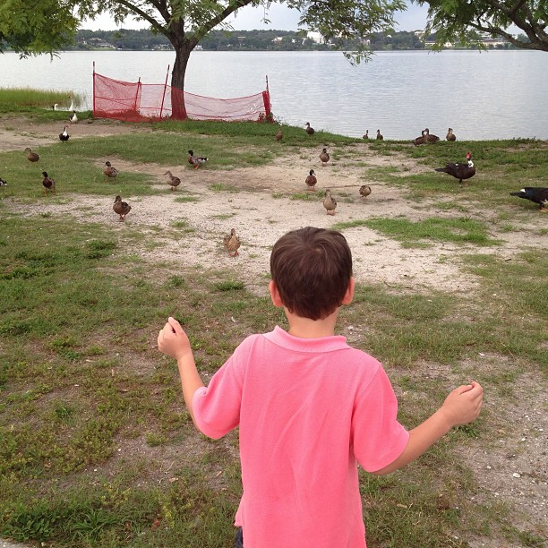 This was 7 seconds before all the ducks converged on my son and ate his socks.. (at Lakeland Yacht and Country Club)
