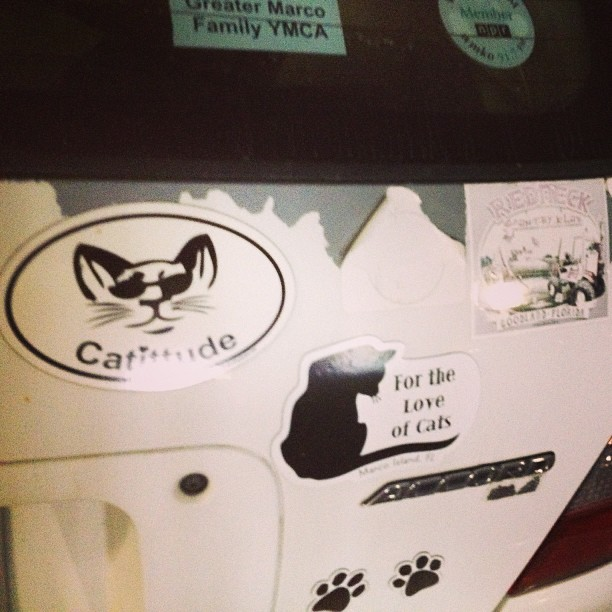 """The bumper sticker says """"cattitude""""? My wife's cat's attitude usually consists of slapping the 2 year on the head.."""