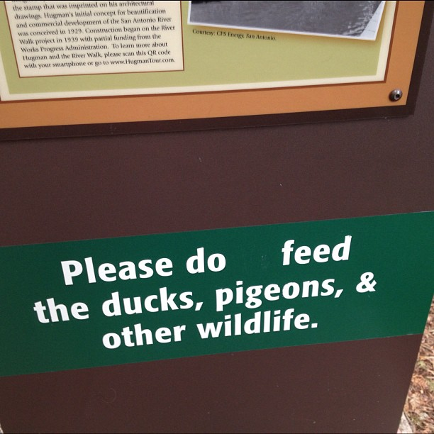 Well this explains why the pigeons are so huge on the San Antonio river walk.