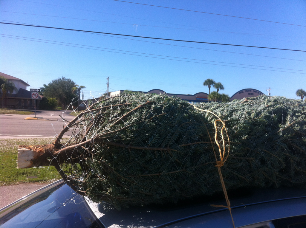 85 degrees and I'm buying a christmas tree.. Yep I live in Florida.