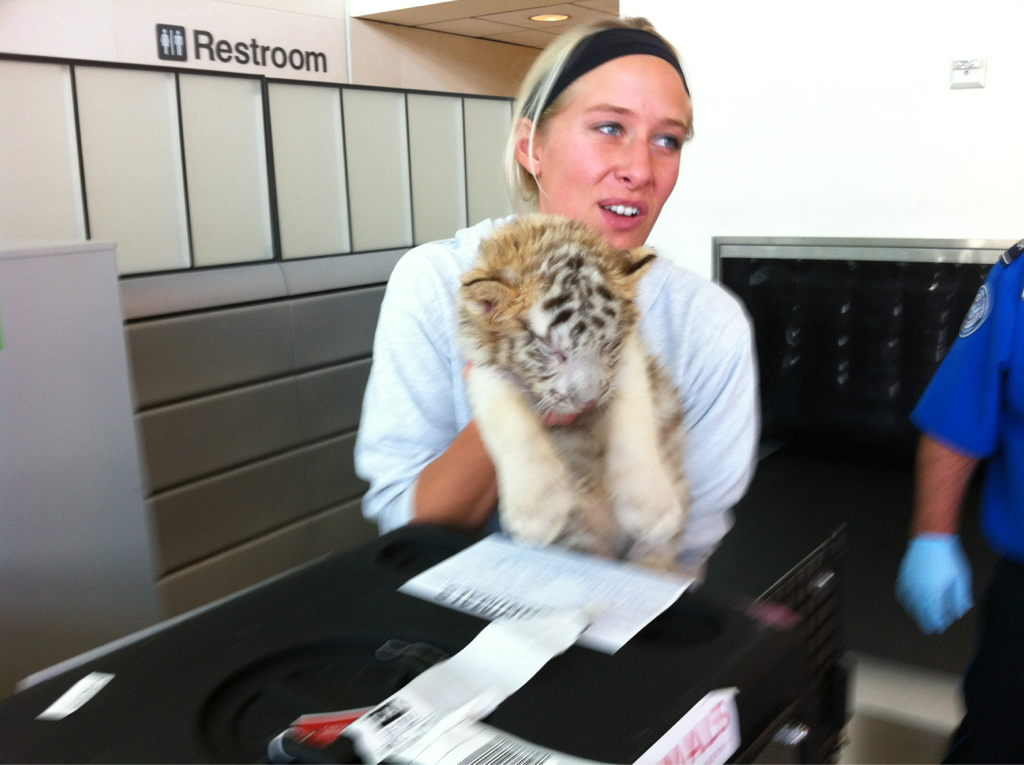 Excuse me Maam' will this baby tiger I'm checking onto plane fit into the overhead baggage?