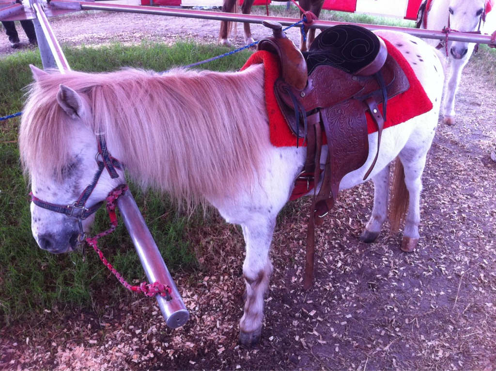 I have an irrational fear of horses… Ponies are just snack sized mini-devils 2 me.