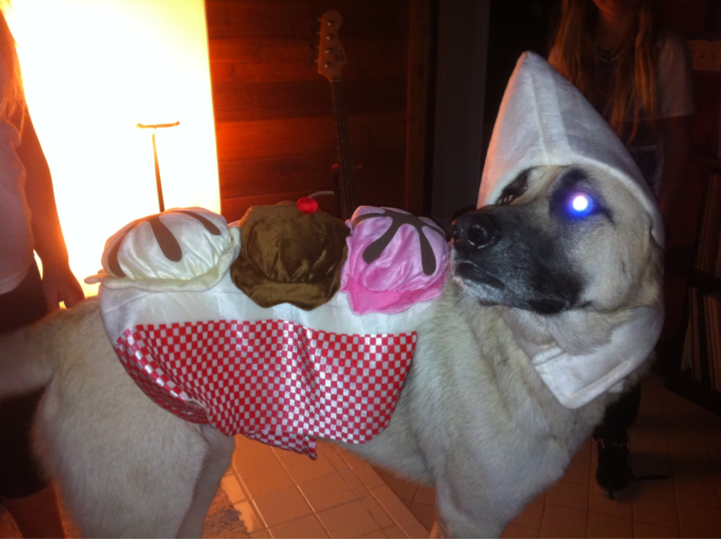 Some things should just be considered animal cruelty… A dog banana split???