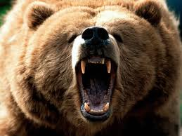 I'm in Alaska today! My goals are to do 1 of the following: wrestle a bear, catch an eagle, dive for king crab, go to the mall.. Do a show. #bearfight