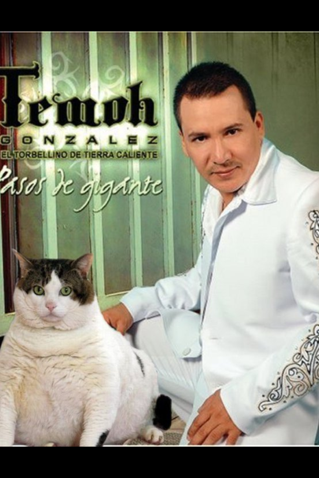 If u ever wondered what I'd look like as a Mexican mariachi singer w/ a large cat then see this pic.. (courtesy of gillilando & temoh Gonzalez)