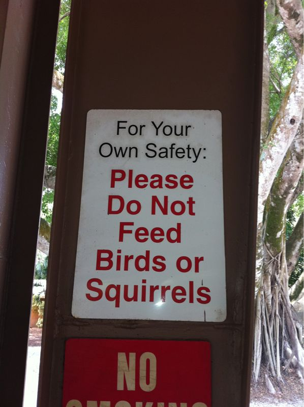 How dangerous are these birds n' squirrels? Will I lose a finger if I give Em a french fry?