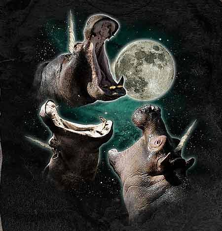 For everyone having a bad day today here is a picture of unicorn hippos howling @ the moon.