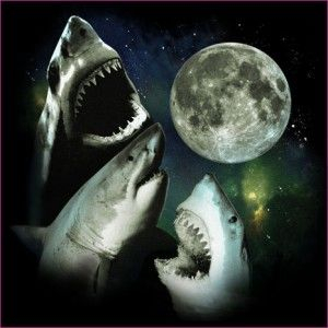 """I have seen awsomesauce and thy name is: """"great white sharks howling @ the moon"""" tshirt"""