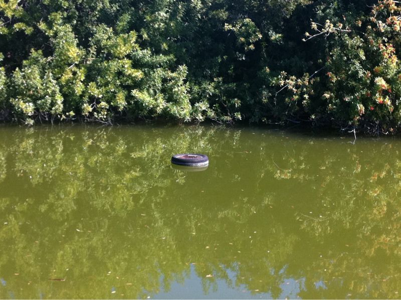 There is a tire floating in the canal behind my house.. Apparently the neighbors are getting wacky again!