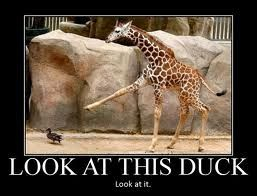 In honor of national duck/giraffe month I would like to post this pic of a giraffe pointing @ a duck. Ur welcome.