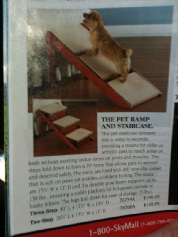 I'm not sure what's dumber.. A step/staircase for dogs or the fact that it costs $200..