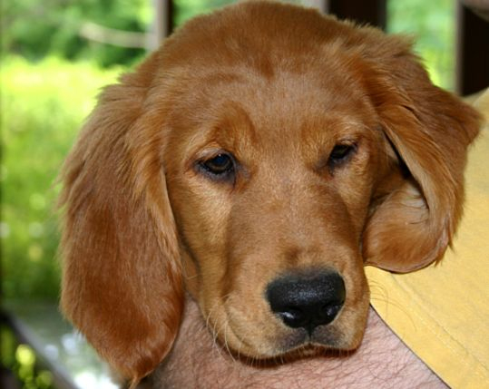 1 dog I could never be scared of is a golden retreiver.. It could have a ninja sword/bazooka & a battle axe & I'd still hug it.