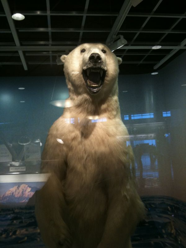 Just landed in anchorge Alaska and was greeted by a polar bear.. I love this state!