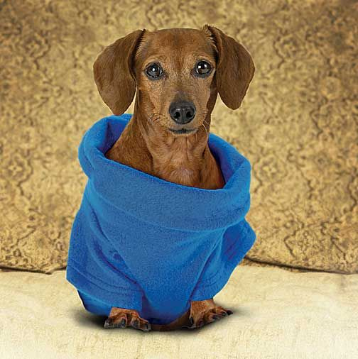 If anyone lives in sw fl and can tell me where to find dog snuggies.. I'll give u a free cd… Help!