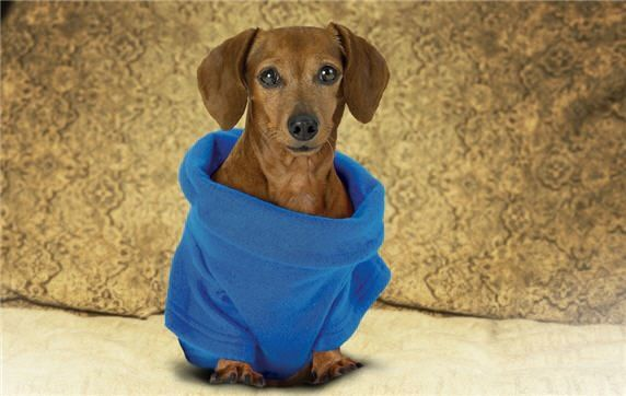 Signs that world is coming to an end: www.snuggiefordogs.com