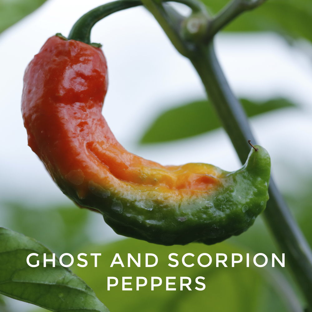-31Scorpion and Ghost Peppers.jpg