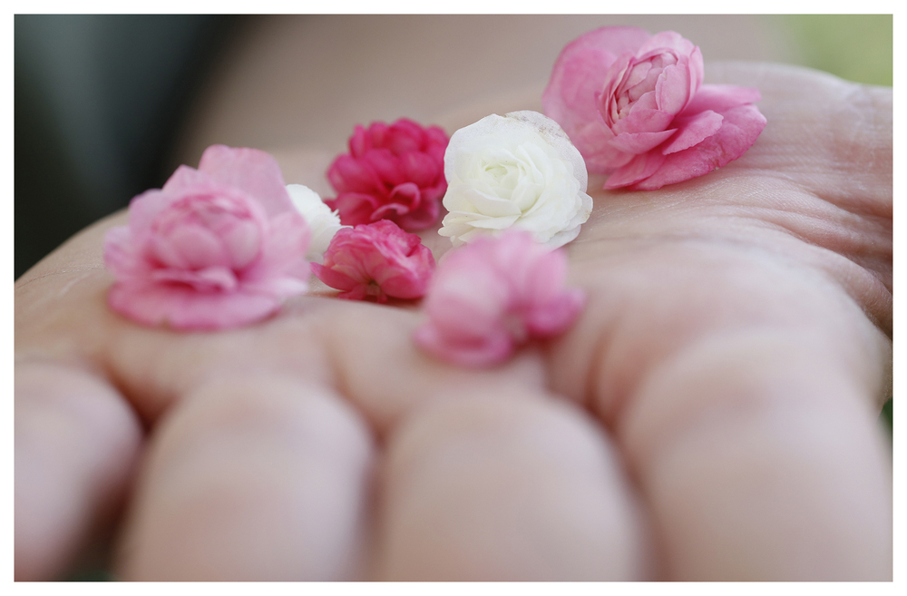Cherry Blossom Begonias