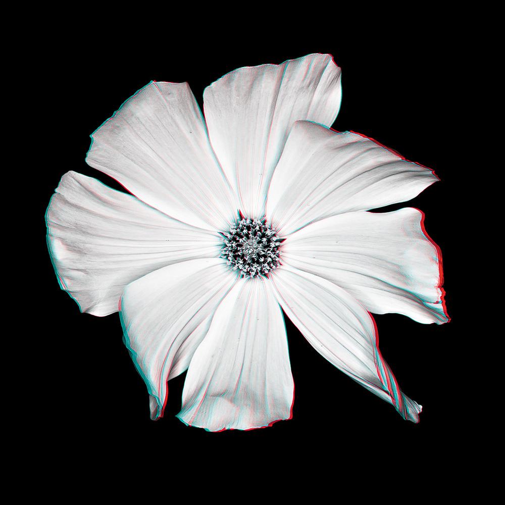 Cosmos No. 1_3D.jpg