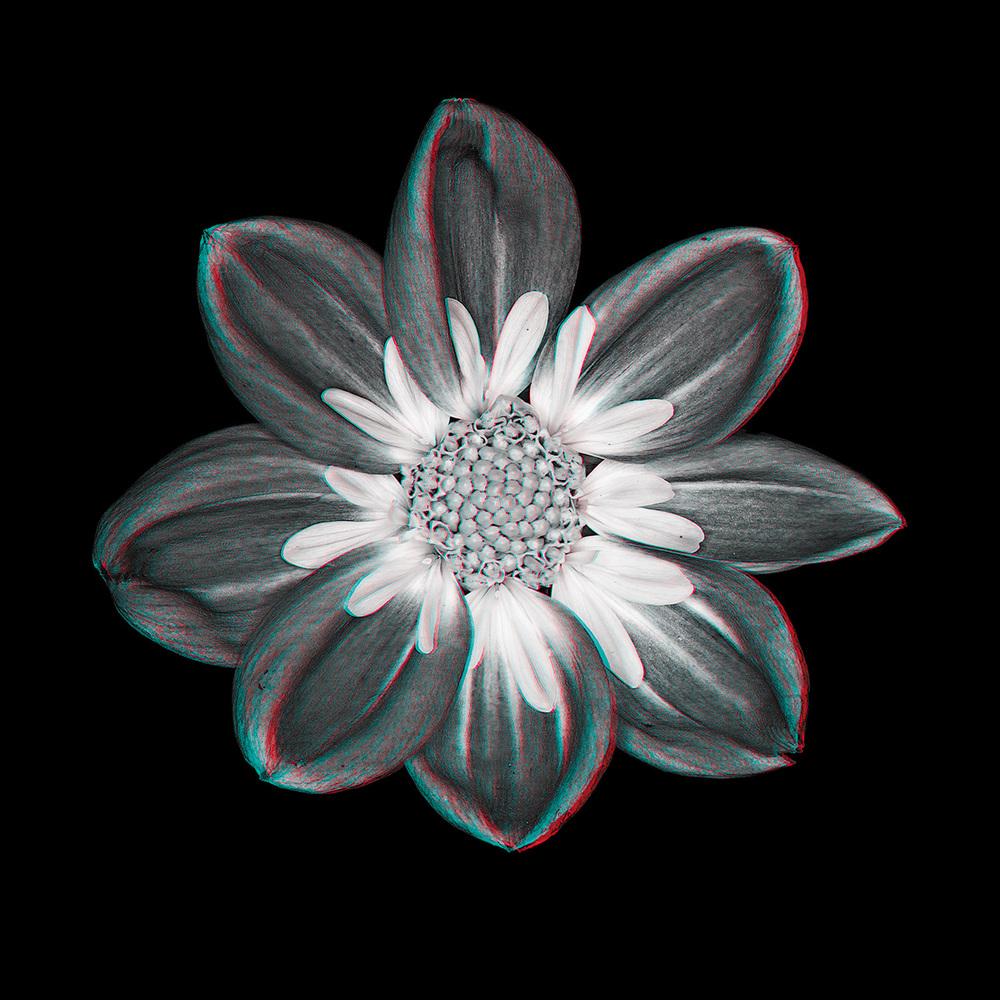 Dahlia No. 2_3D.jpg