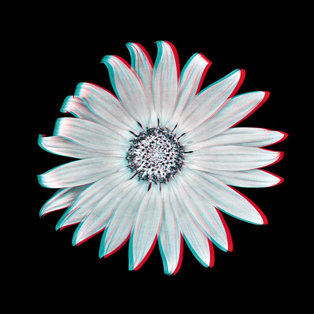 Venidium No. 1_3D.jpg
