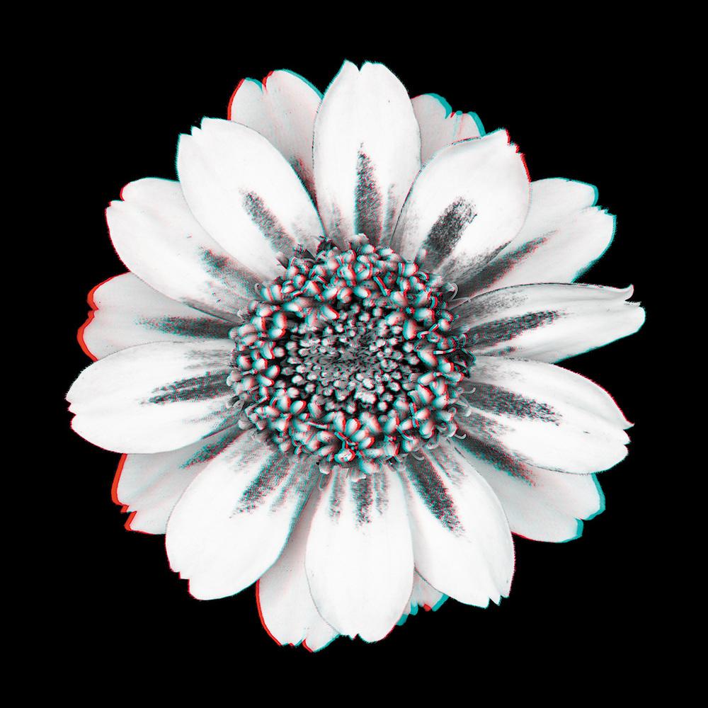 Zinnia No. 8_3D.jpg