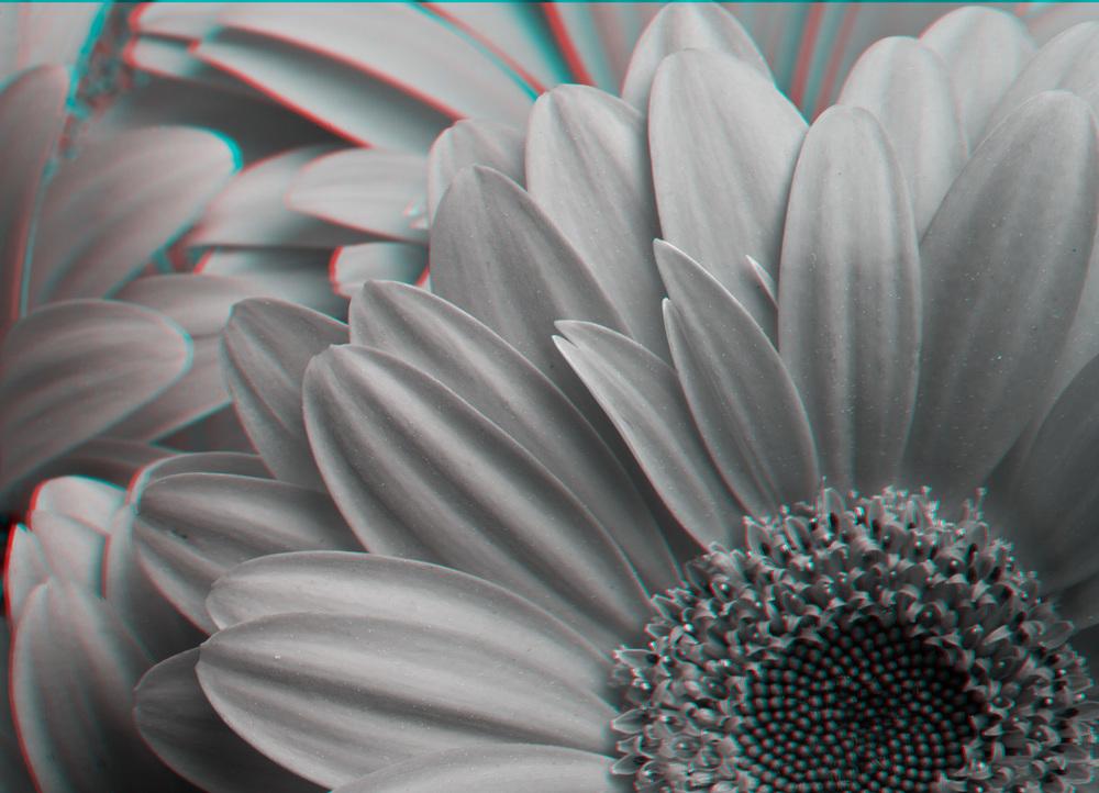 Flower3_R-Edit.jpg