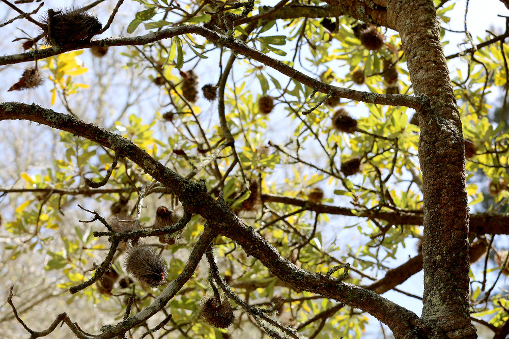 Everglades_23_lowres.jpg