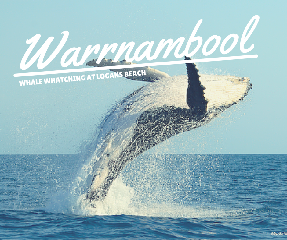 warrnambool whales