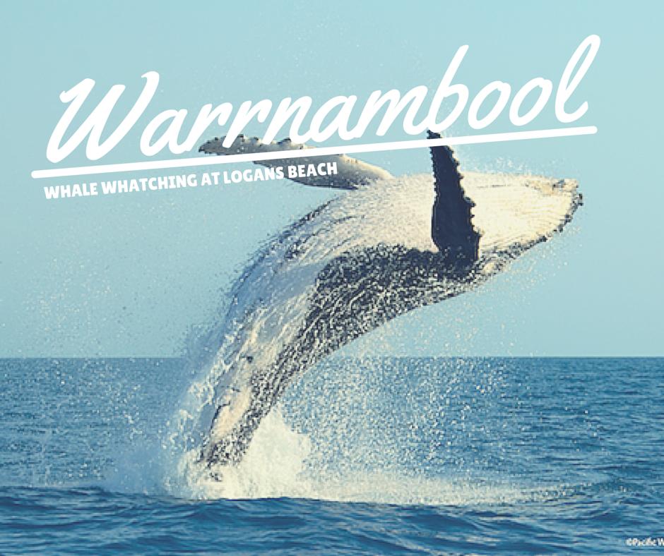 warrnambool whales