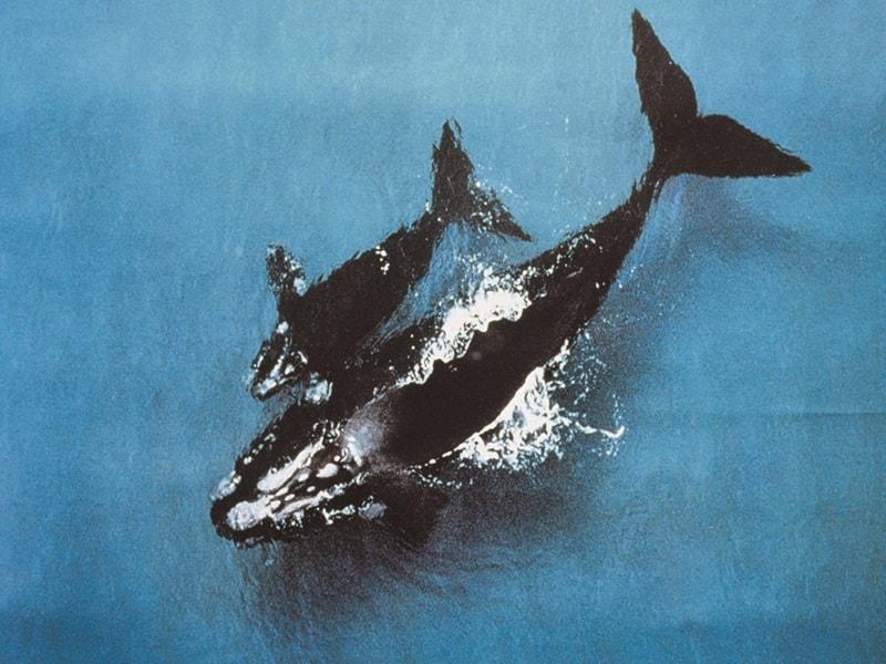 best-western-olde-maritime-hotel-accommodation-warrnambool-whales.jpg