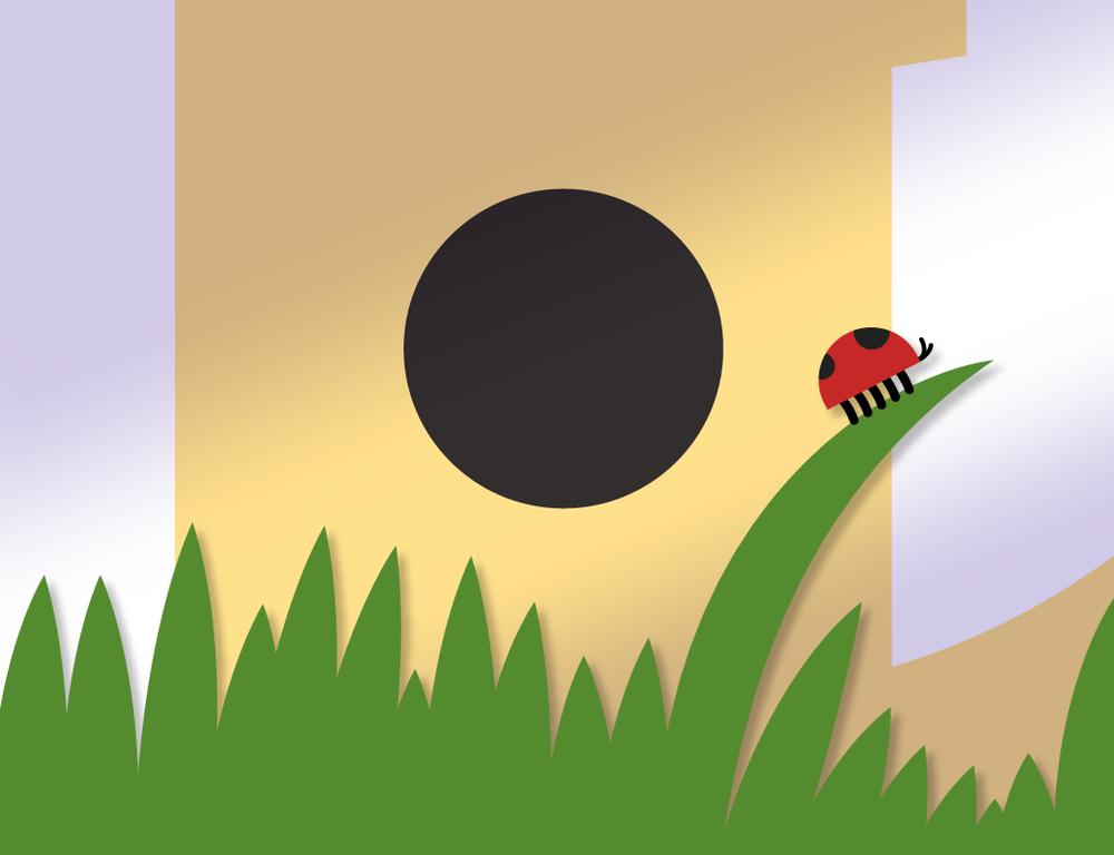 cityfeed_ladybug.png