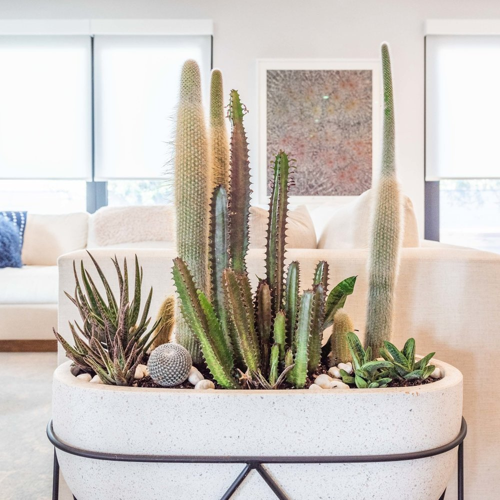 Modern indoor container garden consisting of linear cactus and low growing succulents in neutral colored hues.  Modern pots, modern homes, soothing color palette  Plant Design By: The Potted Poppy, San Diego