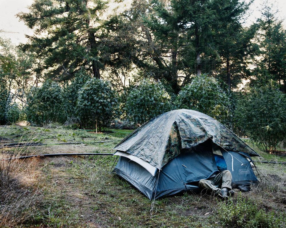 tent_flat.jpg