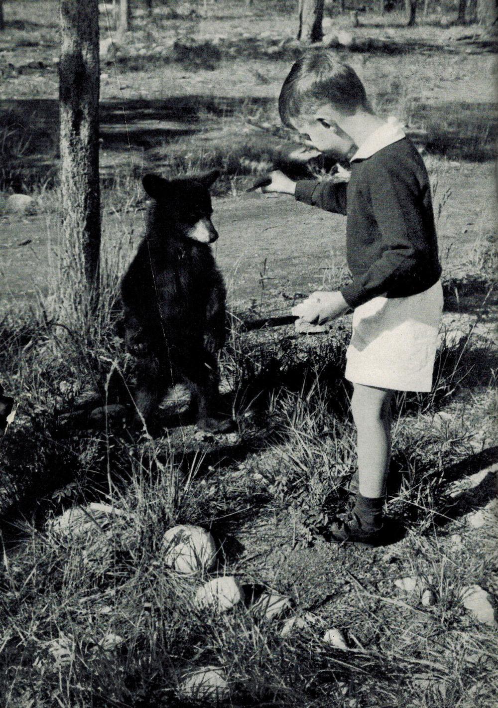 black bear, Jasper National Park 1938 booklet.jpg