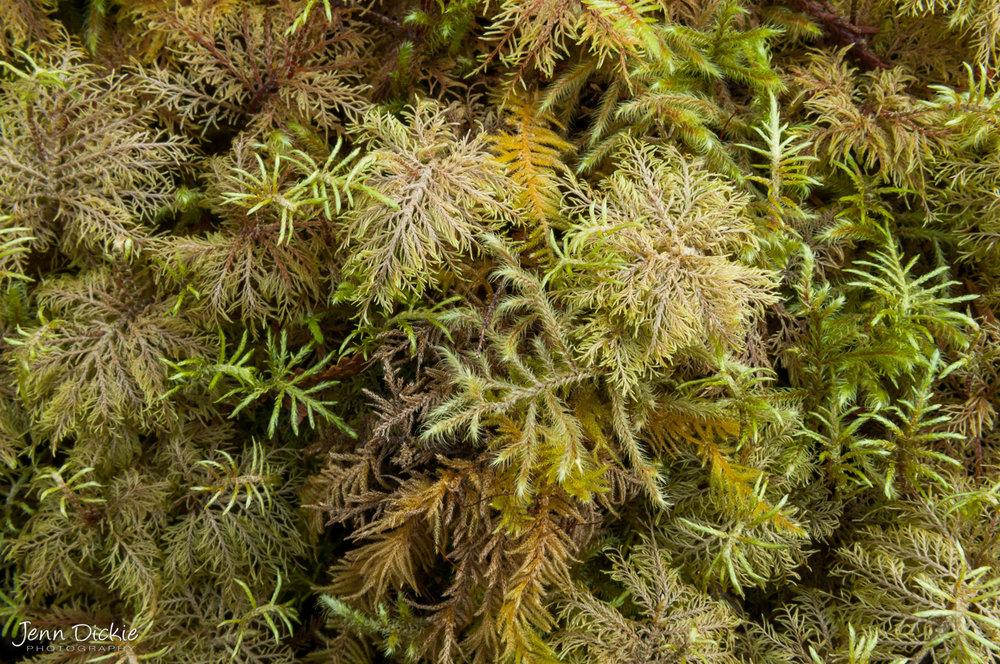 Moss Carpet