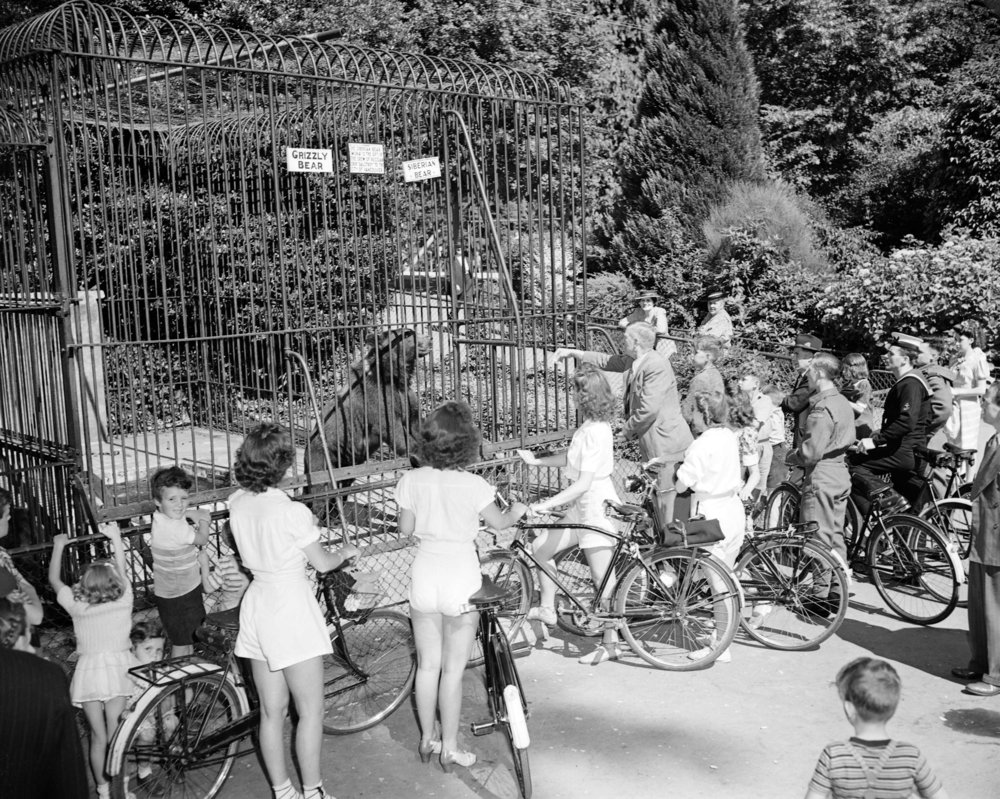 Canadian Youth Hostel bike hike in front of the grizzly bear cage at the Stanley Park Zoo. (Vancouver City Archives Photo)