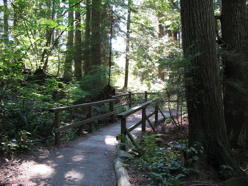 """Consider """"forest bathing"""" in the West End's Stanley Psark. It's good for you! (vancouvertrails.com Photo)"""