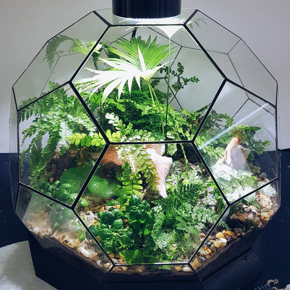 A terrarium can help you create your own indoor Eden.