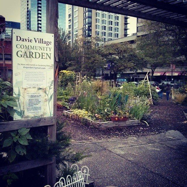 The Davie Village Community Garden.