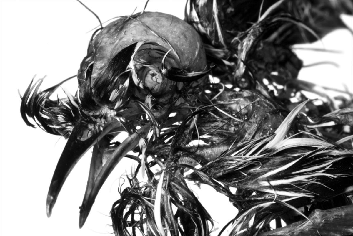 Bird cadaver