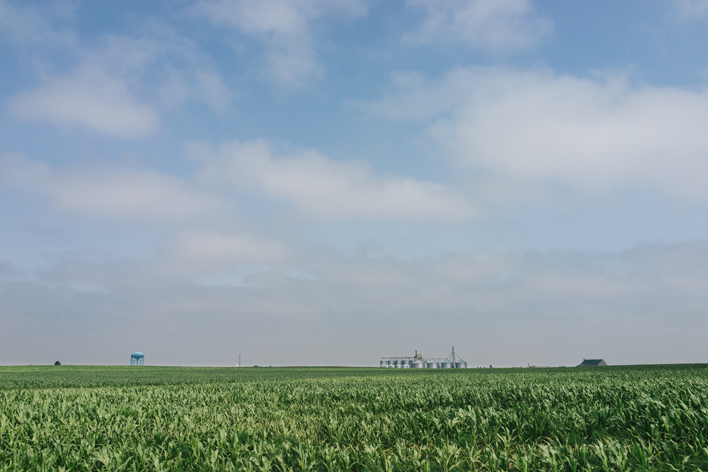 The corn fields in Colby, Kansas. Undulating seas of corn as far as the eye can see.